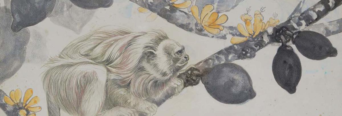 El gavilán Caricare Tinta y pigmento sobre papel 63 x 98 cm.