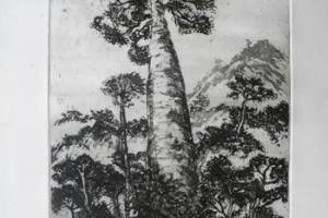 Ceiba : Aguatinta sobre Zinc : 70 x 50 cms