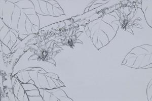 Flor de cacao y polinizador Tinta sobre papel 30 x 60 cm